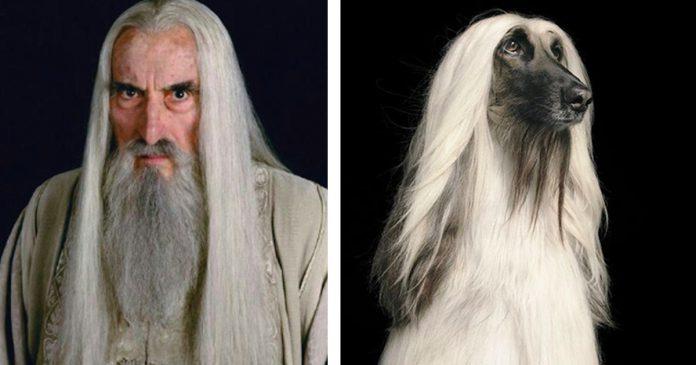 18 fotos que mostram o que aconteceria se todos em O Senhor dos Anéis fossem cachorrinhos