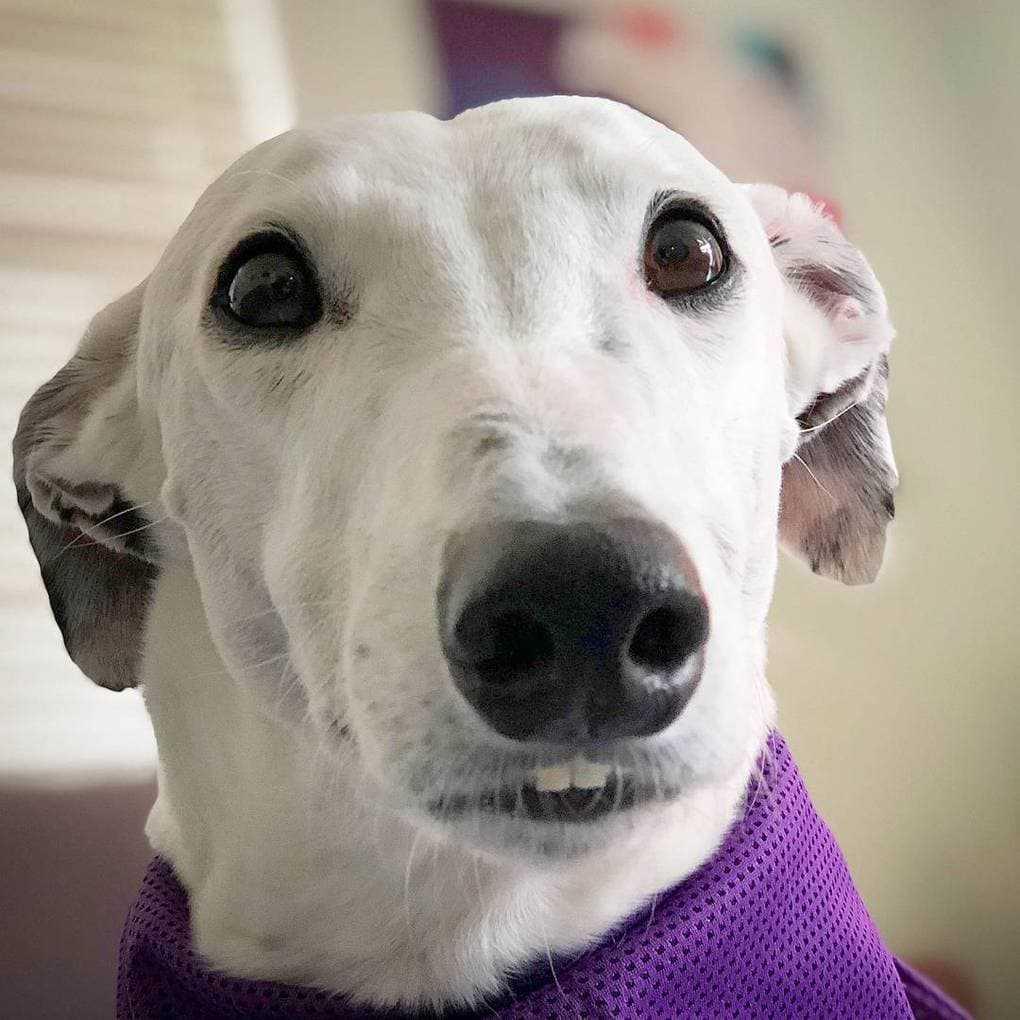 Тут собачка есть одна. Так вот, у неё человеческие зубы