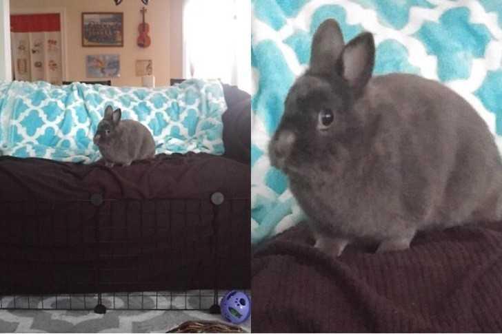 13. On doskonale wie, że nie powinien być na tej kanapie.