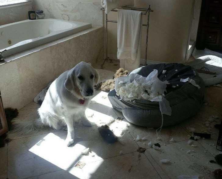 """14. """"Co myślisz o moim nowym łóżku?"""