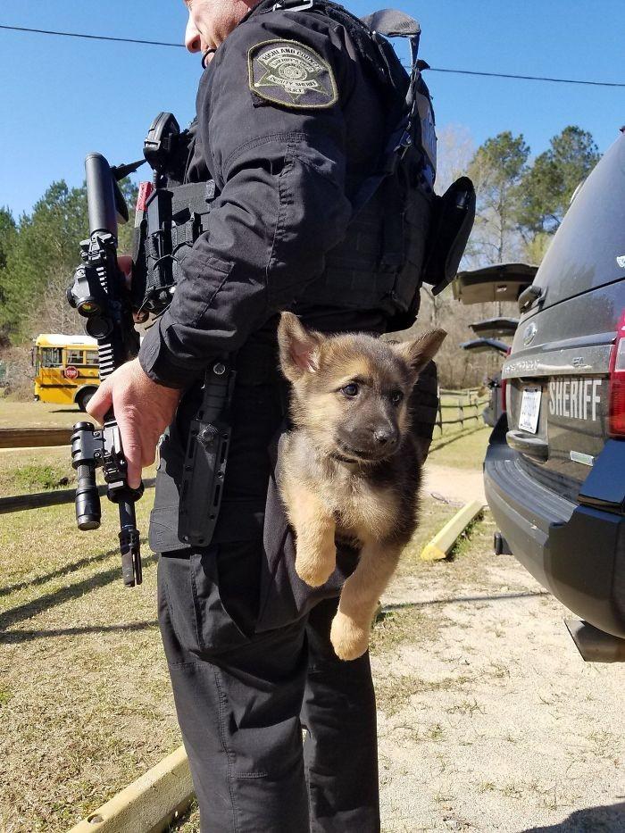 Policyjny szczeniak
