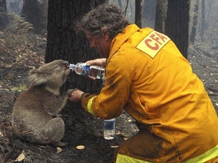 19. Zwierzęta często są największymi ofiarami pożarów