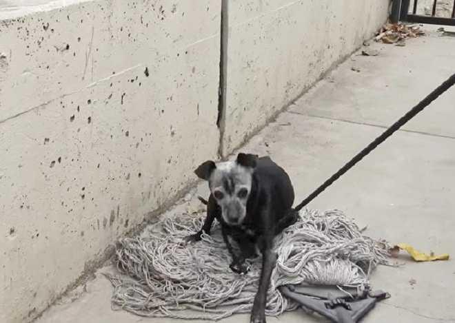 Enquanto os voluntários resgatavam o cachorro, outra alma viva falou. Mas os caras não tinham medo da dupla responsabilidade