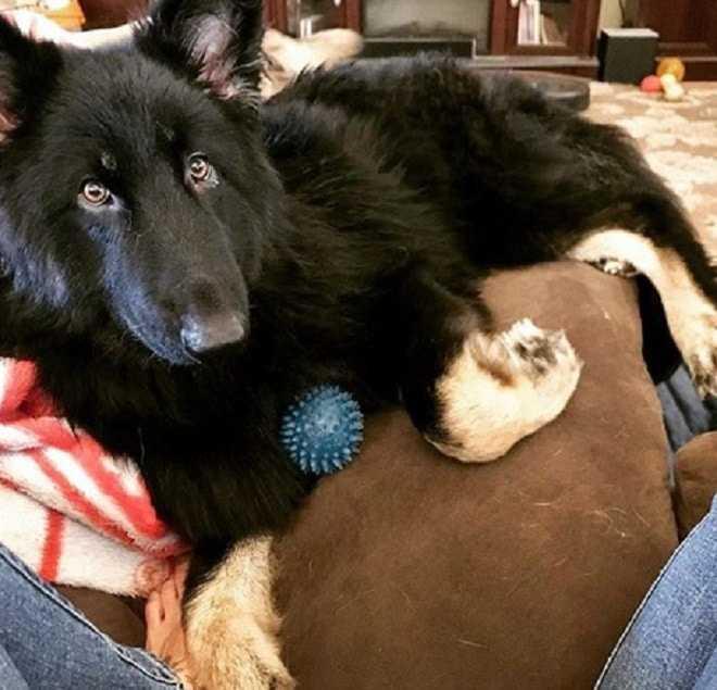 Os donos não concordaram em tratar o cachorro. O diagnóstico foi o motivo para deixá-lo na clínica