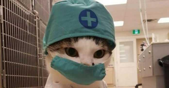 Os gatos mais trabalhadores do mundo. Eles até trabalham sem salário