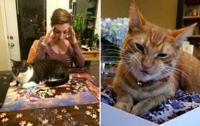 20 pessoas ingênuas que tentaram resolver o quebra-cabeça, mas os gatos vieram e estragaram tudo