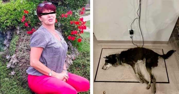 O ex-chefe de Krzyżowa deixou o cão extremamente faminto. O animal moribundo não respondeu aos estímulos