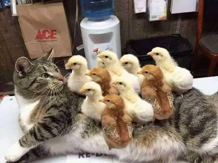 Alguns exemplos realmente bizarros de amizade animal que foram capturados pela câmera.