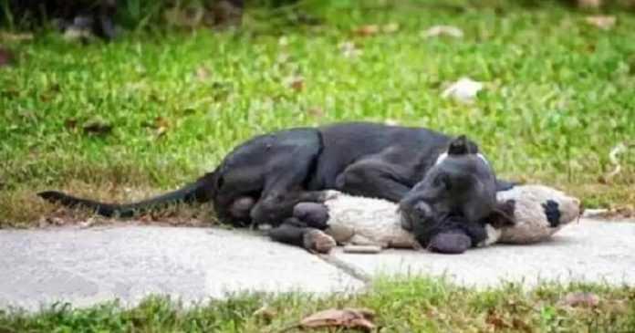 As pessoas encontraram o cachorro na estrada – quando viram o que ela estava segurando, ficaram com o coração apertado!